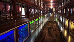 Museo de Ciencias Naturales el Carmen de Onda