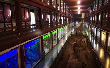 Visita el museo de ciencias naturales el Carmen de Onda